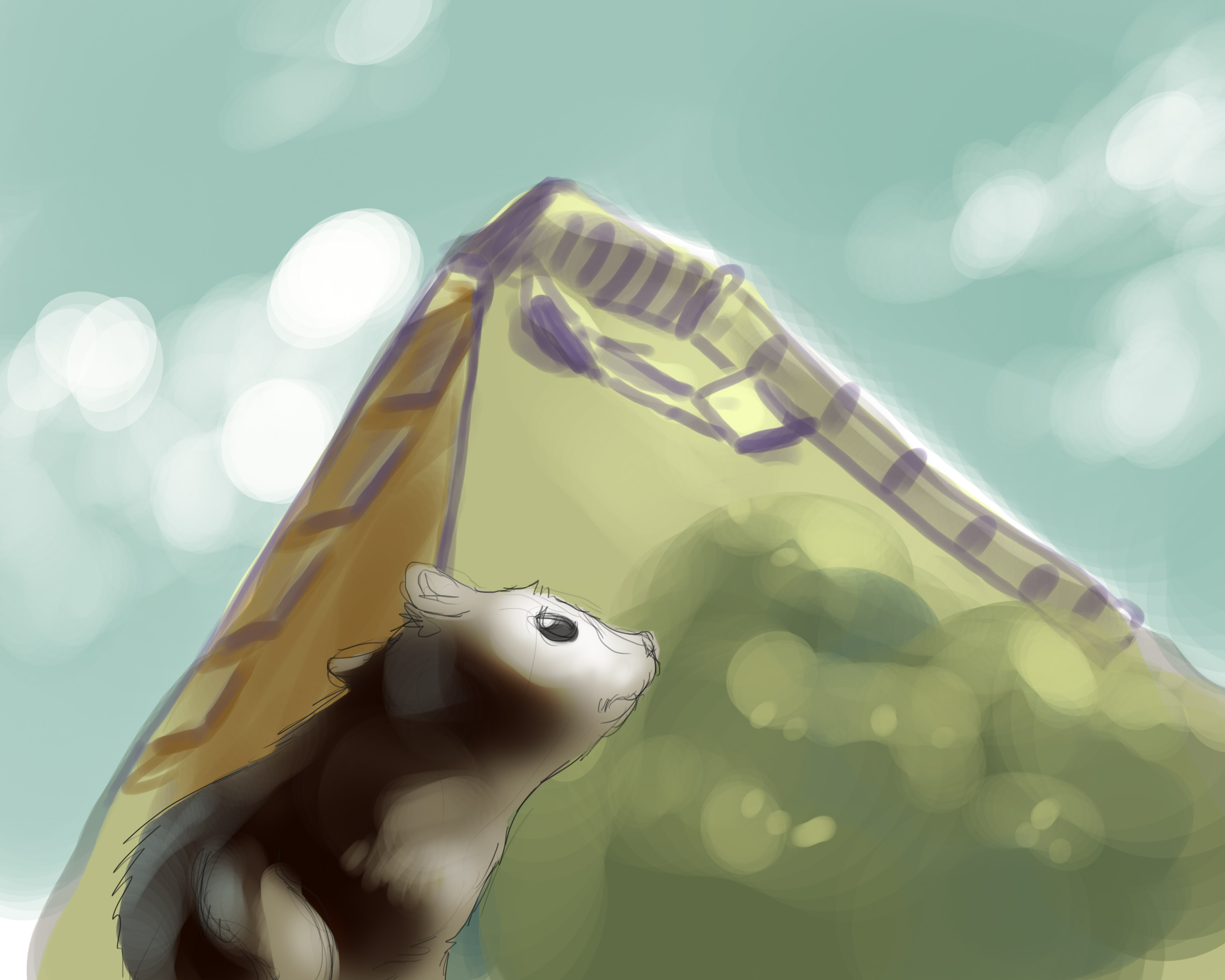 Weasel-neighborhood-study-1